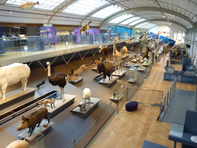 Museum Sciences Naturelles