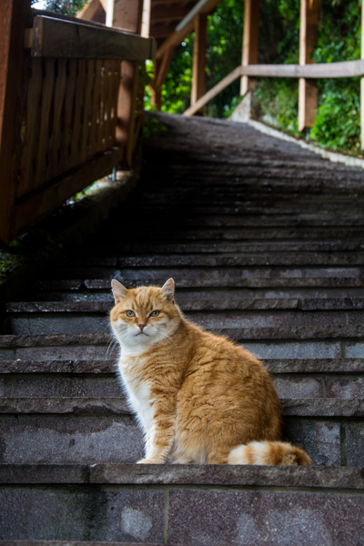 Hallstattská mačka