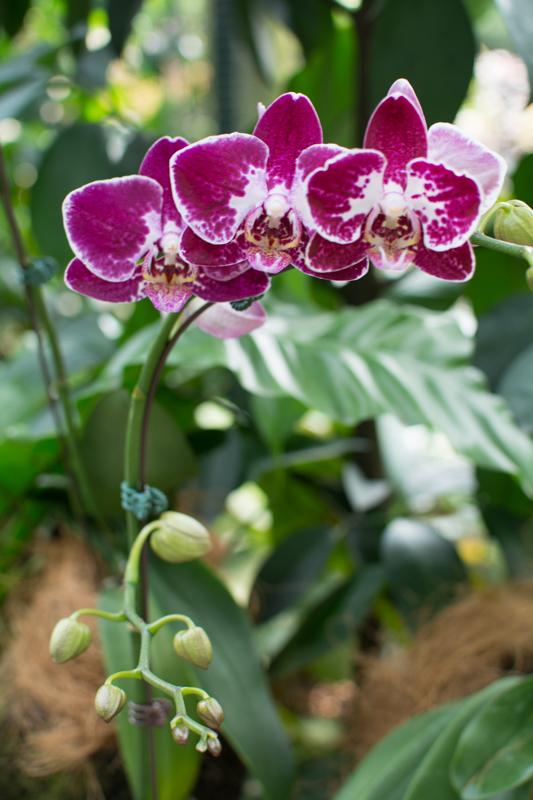 Orchideová záhrada
