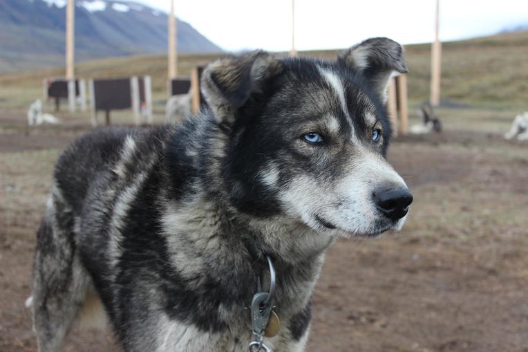 Pes sprievodca