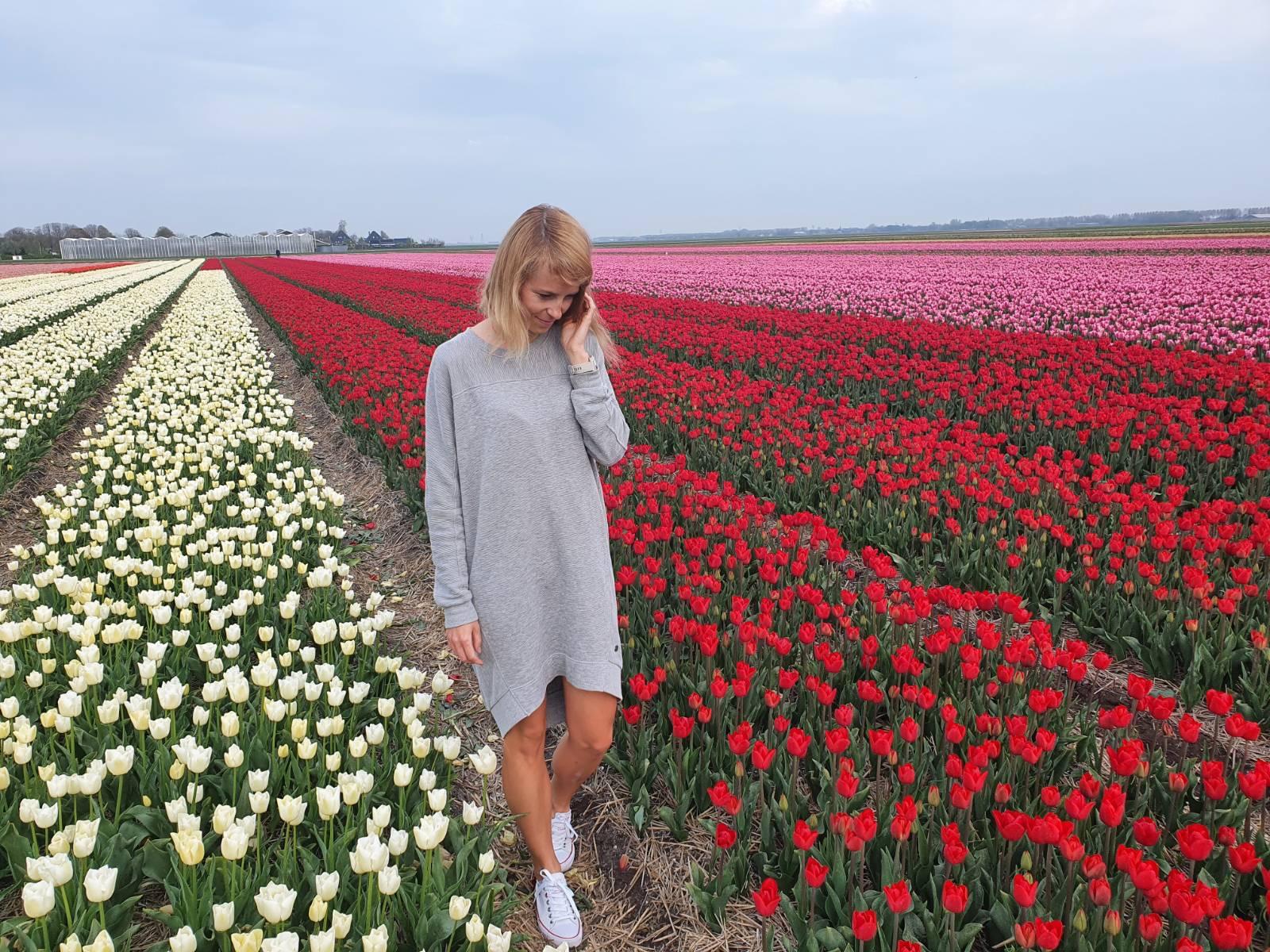 Tulipánové polia
